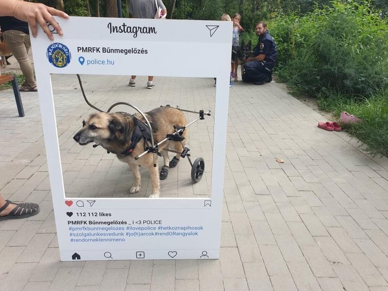Nyomkereső kutyák, állatvédelem, felelős állattartás: állatvédelmi programot tartott a rendőrség