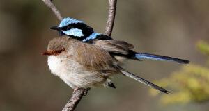 A madarak a tojásaiknak is énekelnek, a fiókák így korán kezdik a tanulást