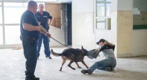 Hat rendőrségi kutya vett részt készségfejlesztő képzésen
