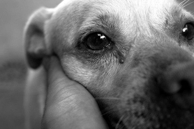 Két kutyáját sem táplálta és gondozta megfelelően az állatkínzó nő