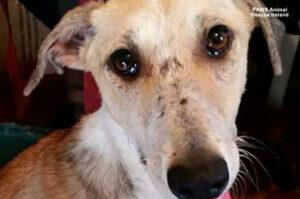 Ilyen bánatos szemei vannak a menhelyen hagyott kutyusnak, talán úgy gondolja senki sem szereti – VIDEÓVAL