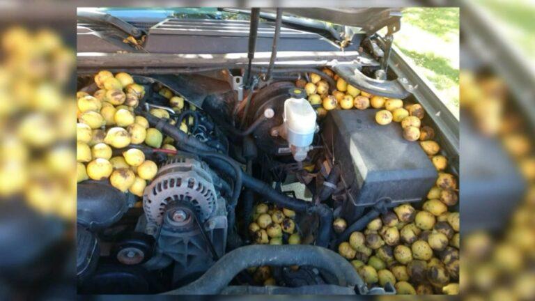 Nem bízta a véletlenre: 160 kiló diót raktározott el egy autóban egy vörös mókus