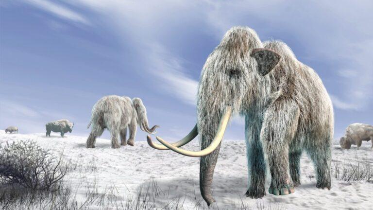 Feltámasztanák a 10000 éve kihalt gyapjas mamutot