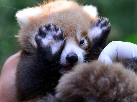 Háromnapos Állat- és Növényszeretet Fesztivállal ünnepli péntektől hétfőig az állatok világnapját a Fővárosi Állat- és Növénykert