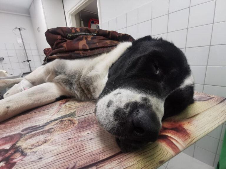 Megmérgeztek egy kutyát Pécsett, még küzdenek az életéért az állatorvosok