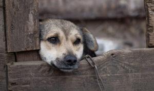 Vádemelés: akár el is pusztulhatott volna a 7 kutya, ha nem jön időben segítség