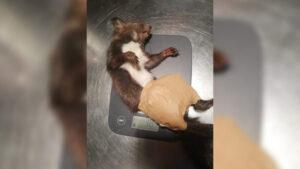 Törött csontú, mozgásképtelen mókust mentettek a debreceni tűzoltók – VIDEÓ