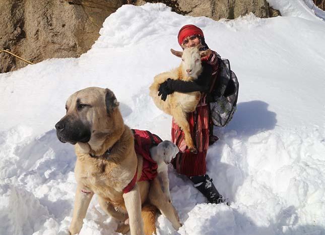 A hátán cipelte haza a török kislány és kutyája az útközben világra jött kecskegidát és anyját