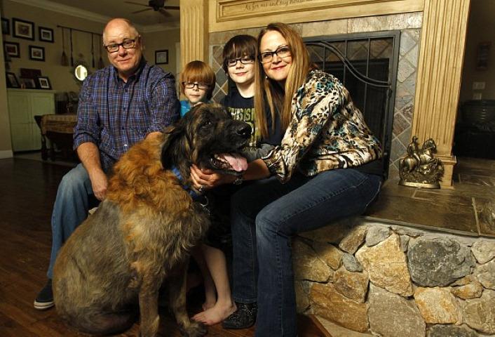 El kellett volna altatnia a kutyát, ehelyett hónapokig vérdonorként tartotta