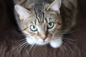 Megölte szomszédját, mert annak a macskája átkóborolt az udvarába