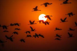 Sokkoló adatok: minden ötödik európai madárfajt kihalás fenyeget